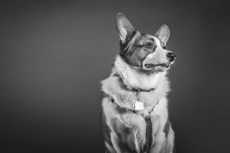 Top 35 Best Designer Dog Collars of 2017