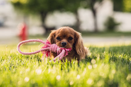 Top 50 Best Indestructible Dog Toys Ever Made