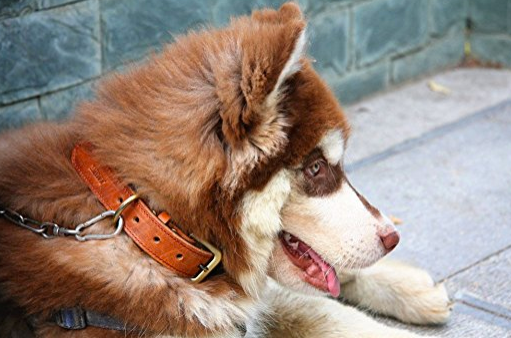 Genuine Leather Dog Collar by Moonpet - Assorted Colors/Sizes
