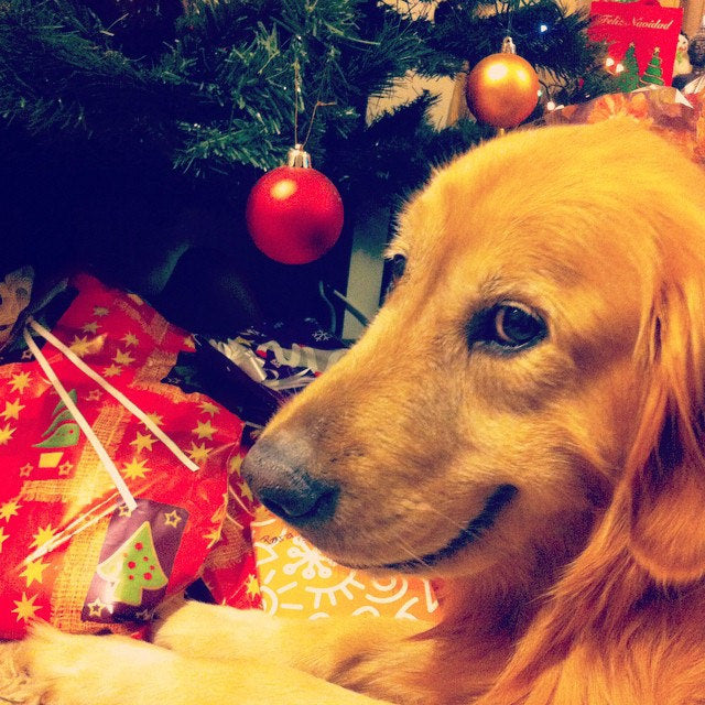 Happy Howl-idays: 10 Christmas Gift Ideas for the Dog Lover