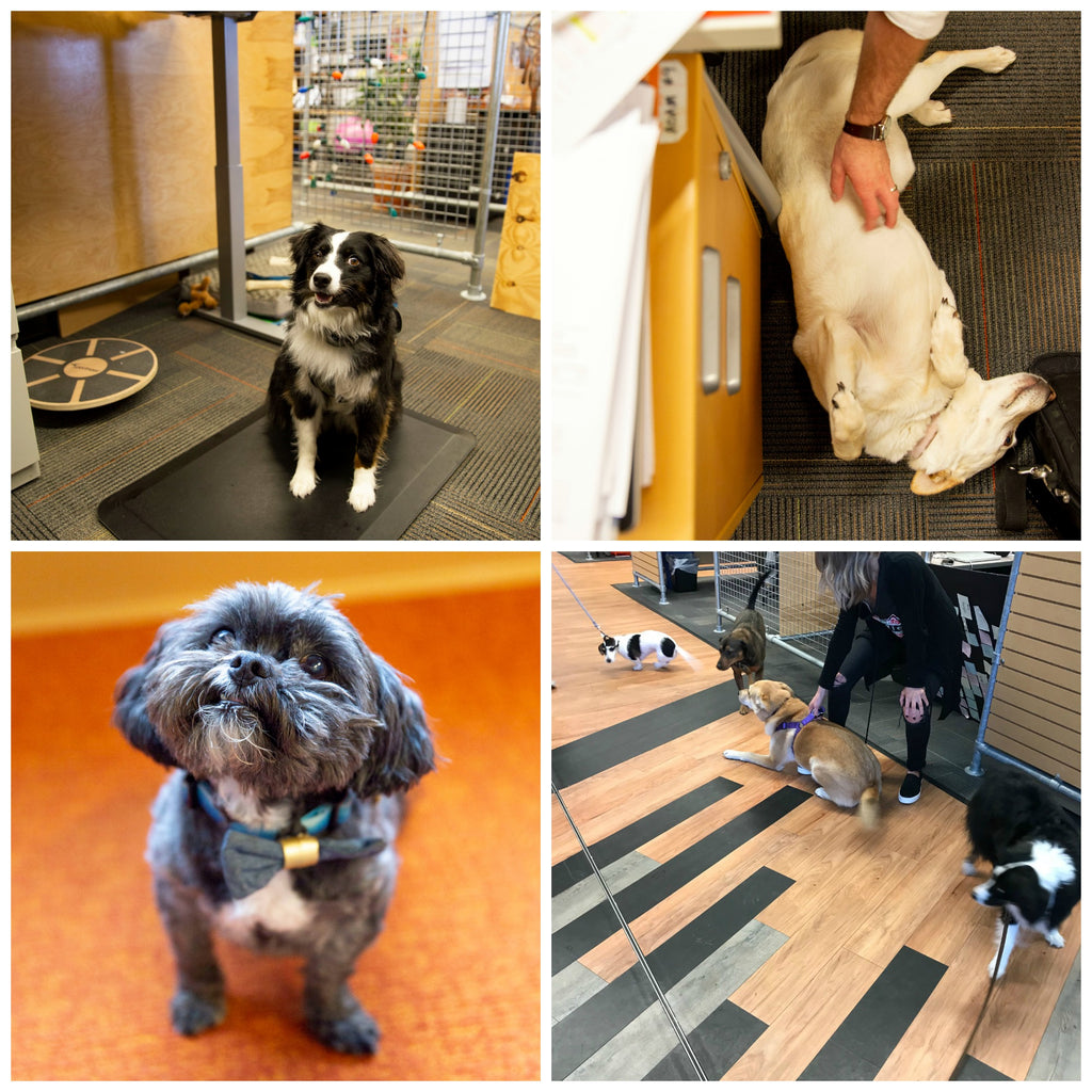 5 Plus Benefits of Dogs in the Workplace