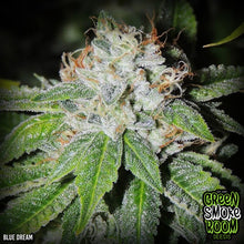 Blue Dream Feminized - 1 Seed