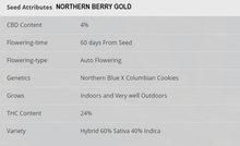 Northern Berry Gold Auto - 1 Seed