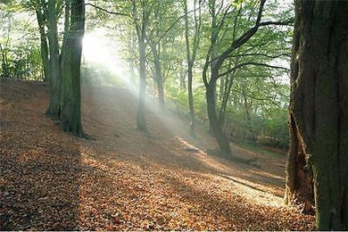 GUIDED MEDITATION FOREST JOURNEY MP3 DIGITAL DOWNLOAD, VISUALISATION RELAXATION, WOODLAND WALK