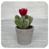Cactus with Pink Decorative Flower