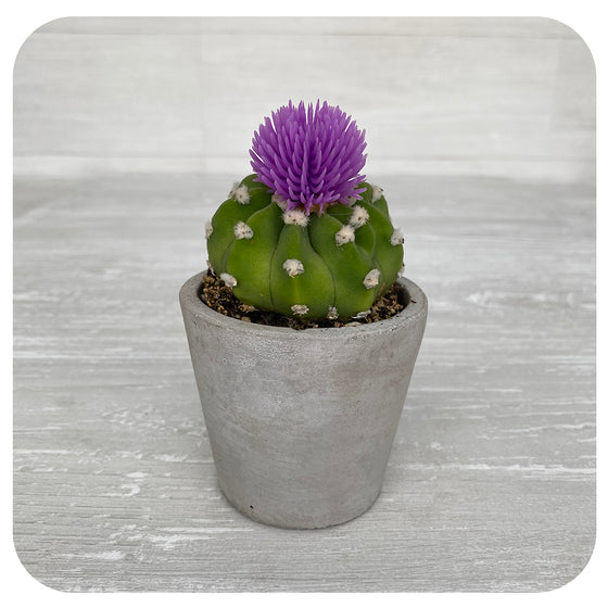 Cactus with Purple Decorative Flower