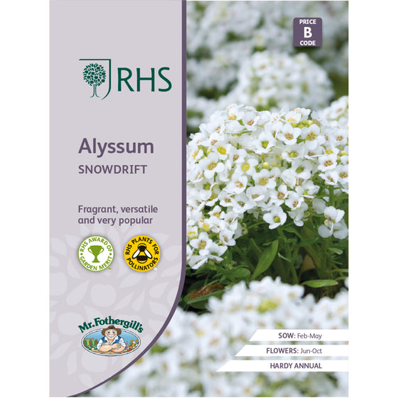 Alyssum 'Snowdrift'  or 'Carpet of Snow' Seeds