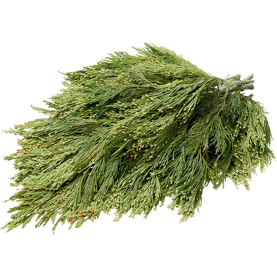 Incense Cedar Boughs