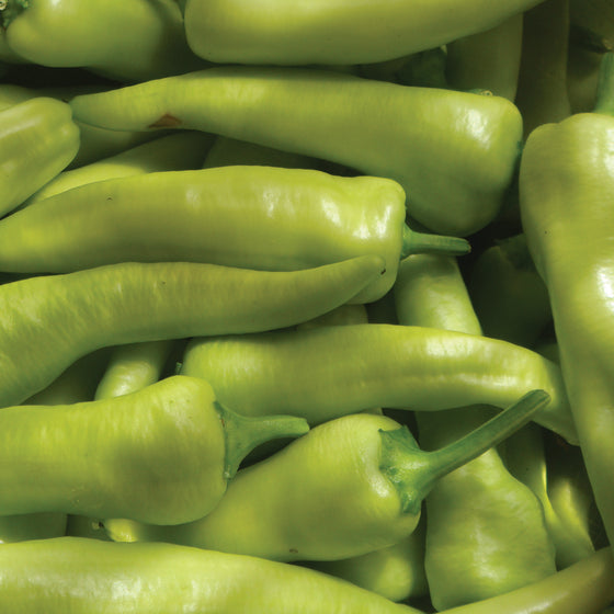Organic Hungarian Banana Peppers