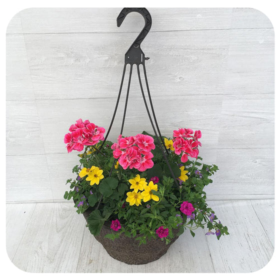 Hanging Basket Sun 6