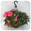 Hanging Basket Shade 7