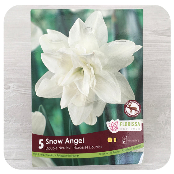 Daffodil 'Snow Angel' (Narcissus)