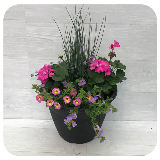 Sun arrangement round - Pink with Blue Bacopa