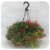 Hanging Basket Sun 40