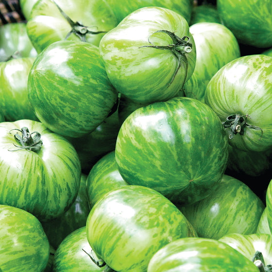 Organic Heirloom Green Zebra Tomato