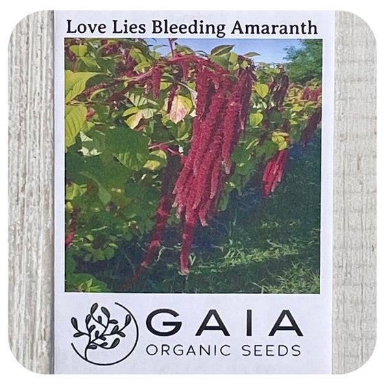 Amaranth Love Lies Bleeding Seeds (Organic)
