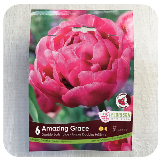 Tulip 'Amazing Grace'