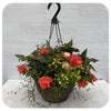 Hanging Basket Shade 2