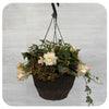Hanging Basket Shade 3