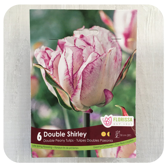 Tulip 'Double Shirley'