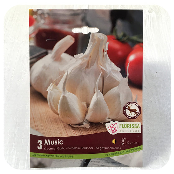 Garlic 'Music' (White)