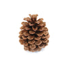 Pinecone - Natural