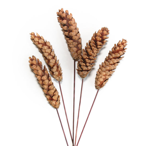 Pinecones - Strobus - Natural