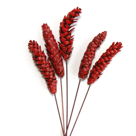 Pinecones - Strobus - Red