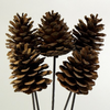 Pinecone on Stem - Natural