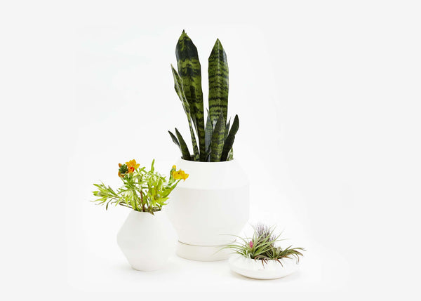 Radial Vessel - Planter