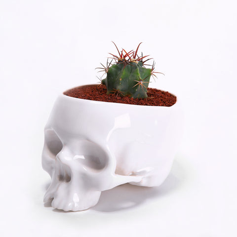Flower-pot Skull shiny
