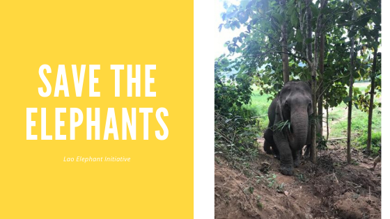 The Lao Elephant Initiative