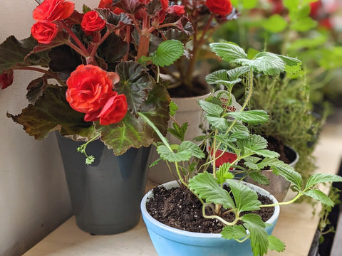 Potted plants in vintage upcycled containers