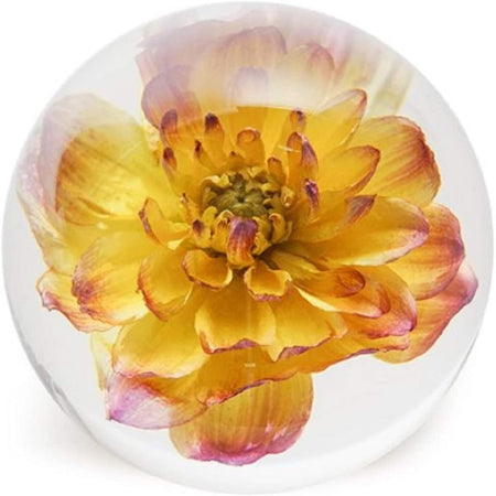 glass sphere with yellow and pink dahlia flower inside.