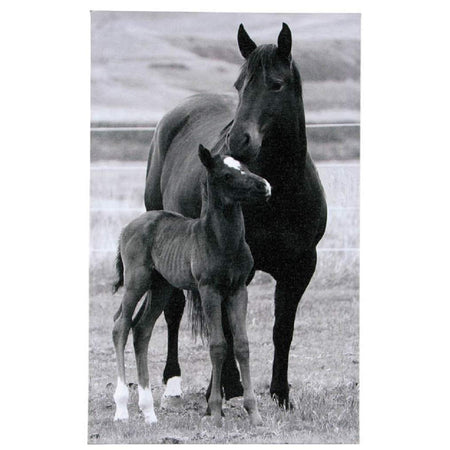 Black & white print shows horse and foal standing in pasture against each other.
