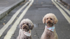 5 of our favorite twin pet Instagram accounts