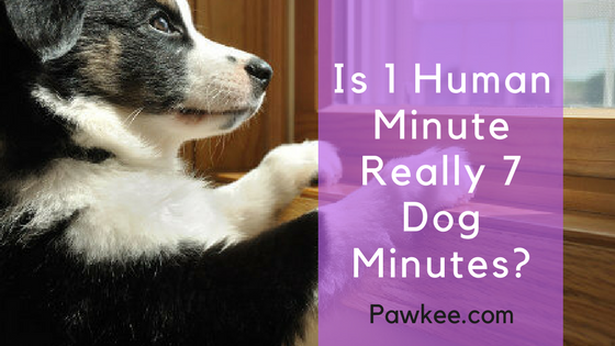 Is 1 Human Minute Really 7 Dog Minutes?