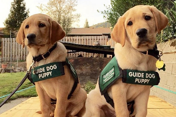 Happy Anniversary Seeing Eye Dogs 🐶🐾 💕