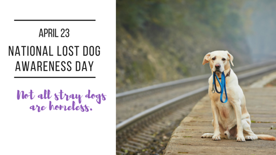 National Lost Dog Awareness Day