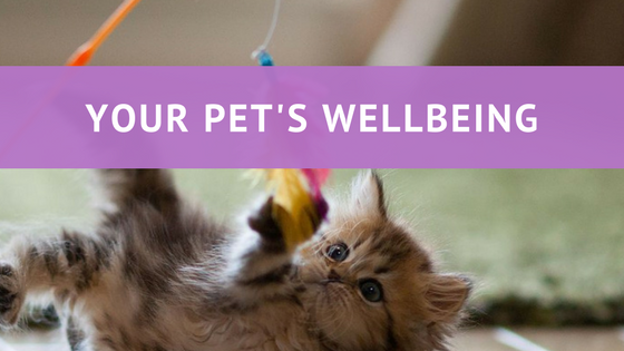 Your Pet's Wellbeing