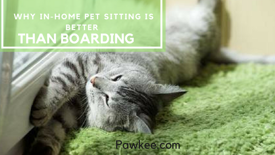 Why In-home Pet Sitting is Better than Boarding