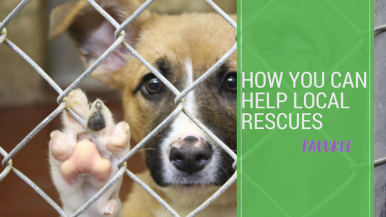 How you can help Local Rescues