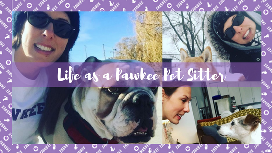 Life as a Pawkee Pet Sitter