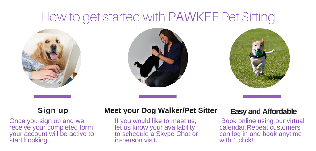 How to book dog walker online in toronto