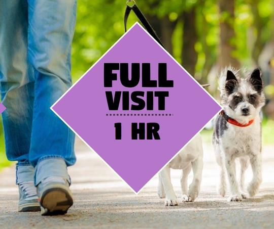 20 PRIVATE Walks 60min Pawkee Package - Pawkee Pet Sitting