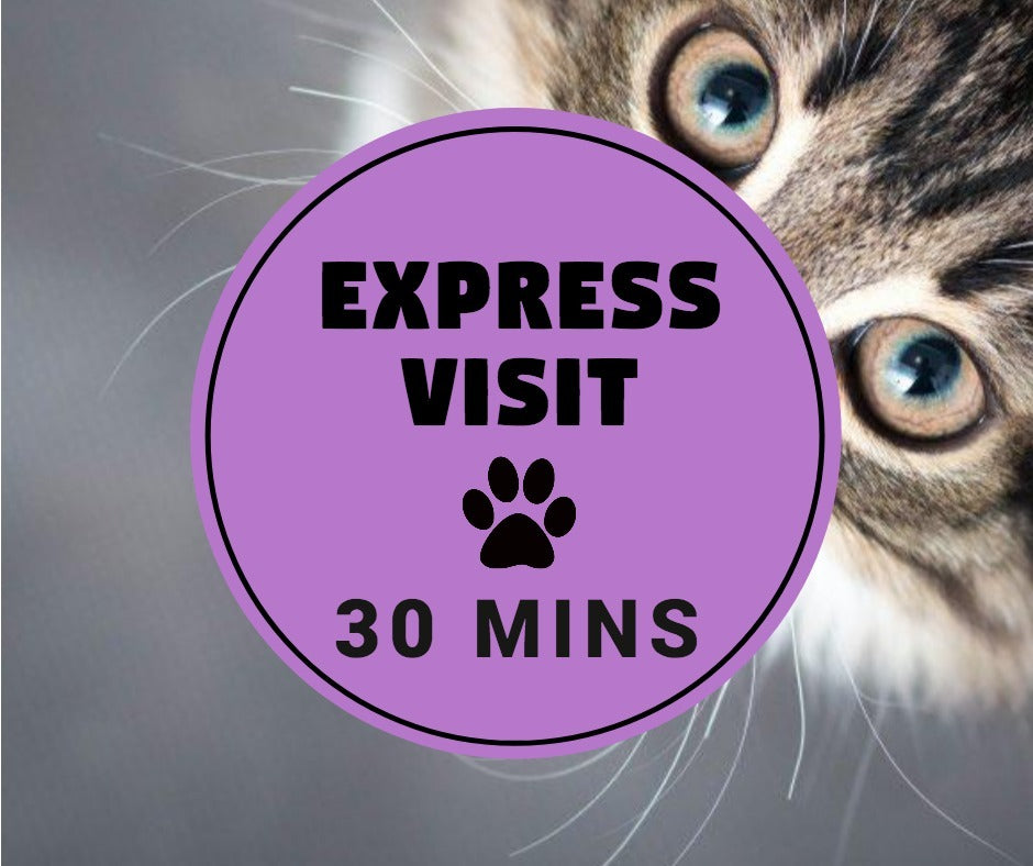 (30 mins Private Cat Visit) Express Visit - Pawkee Pet Sitting