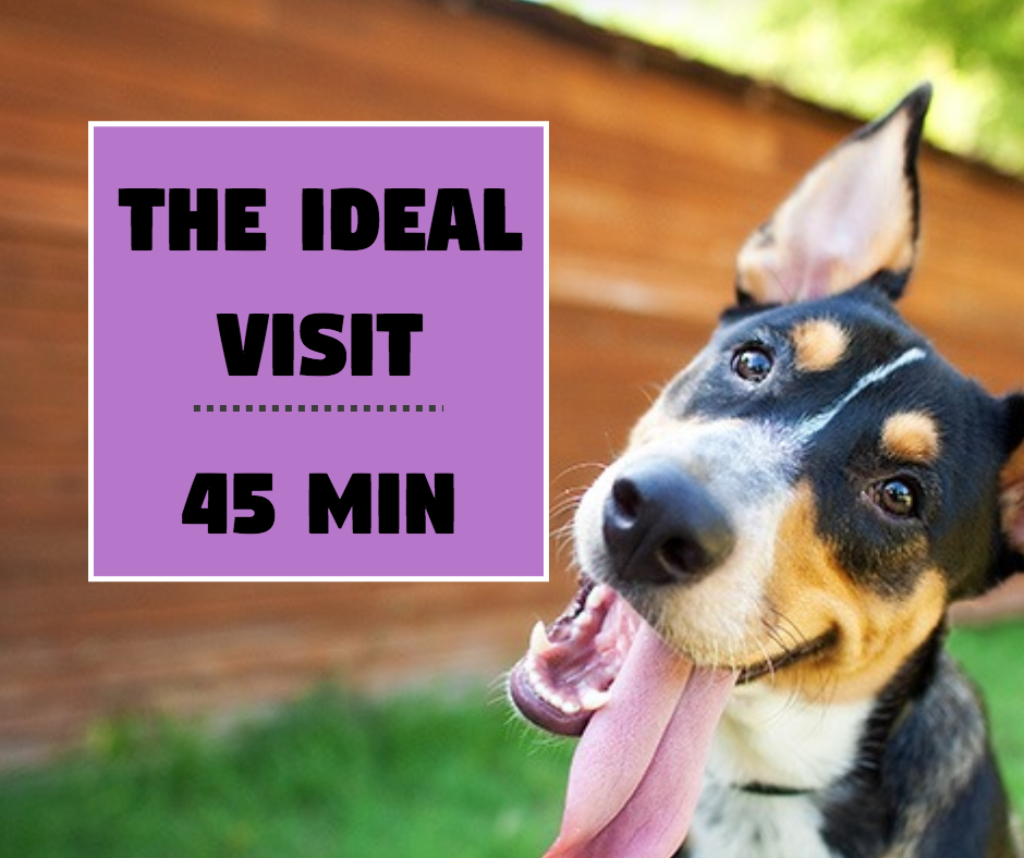 20 PRIVATE Walks 45min Pawkee Package - Pawkee Pet Sitting