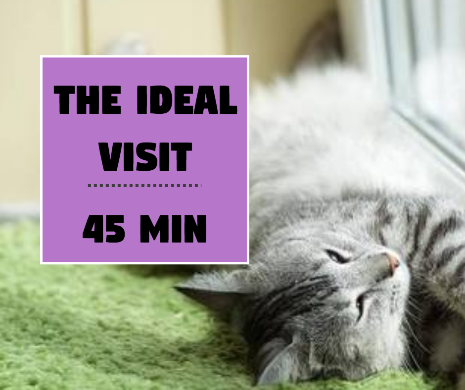 "(45 mins Private Cat Visit) ""The Ideal Visit "" - Pawkee Pet Sitting"