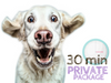 20 PRIVATE 30min Walks / Visits Pawkee Package - Pawkee Pet Sitting