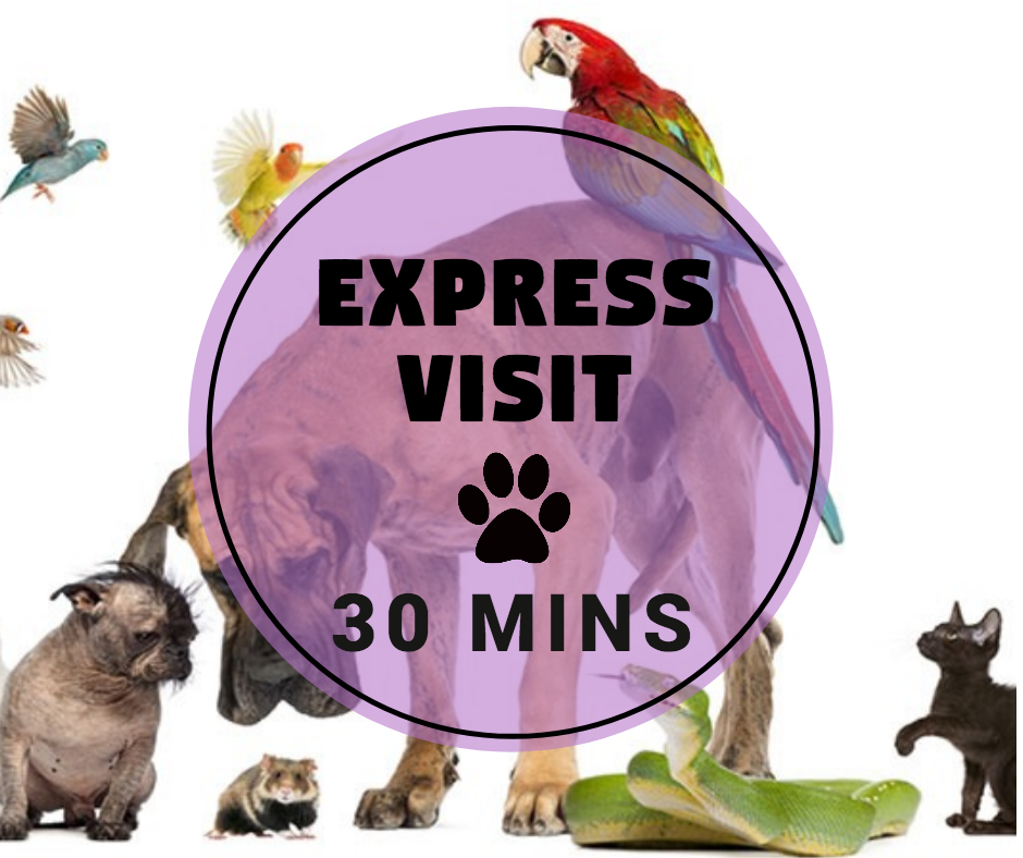 PET SITTING 30 min Visit - Pawkee Pet Sitting